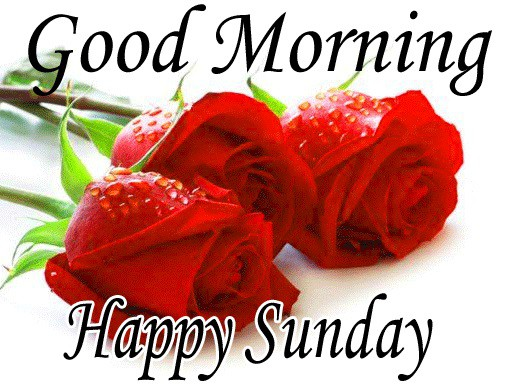 images of good morning with water drop rose with happy Sunday