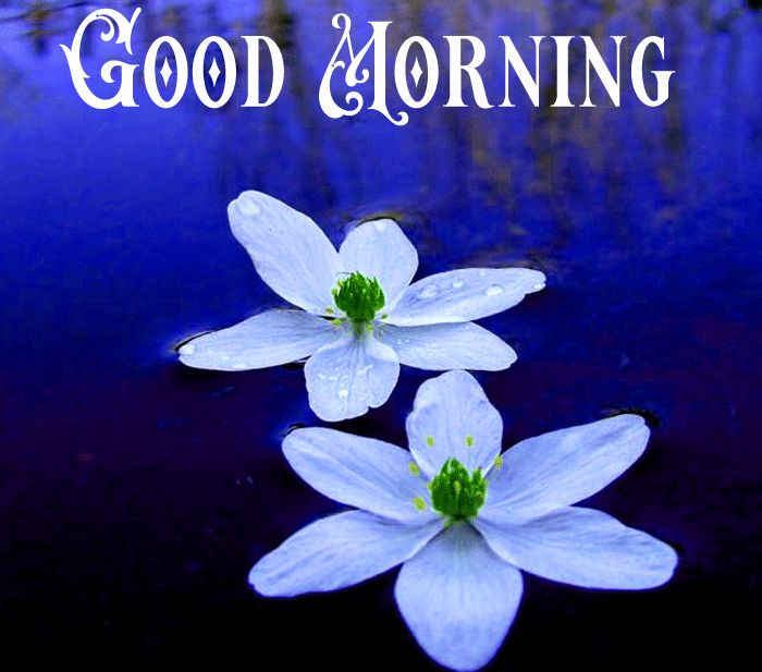 Good morning with white flowers
