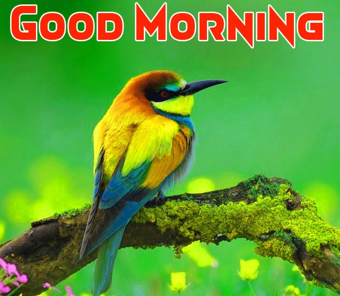 good morning birds images