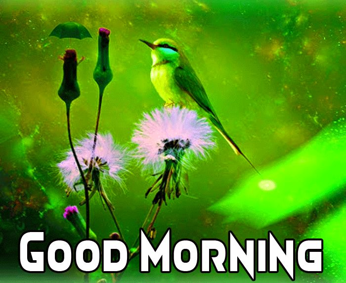 good morning images of birds