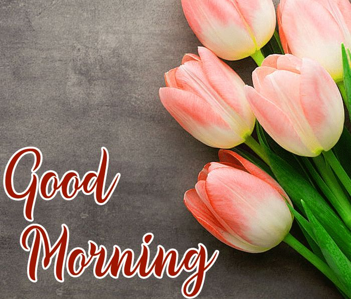 images of flowers good morning