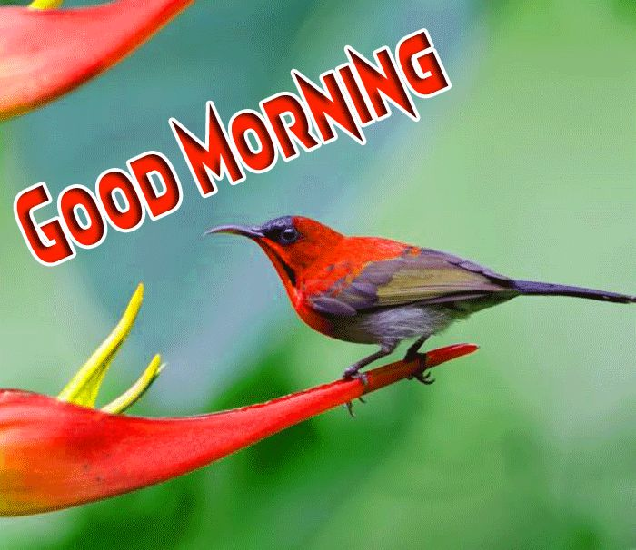 love birds good morning images