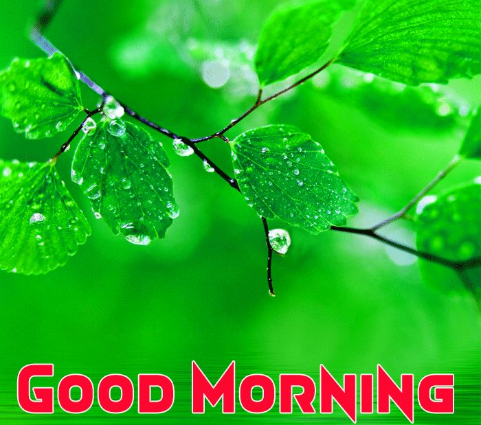 beautiful flowers with good morning image