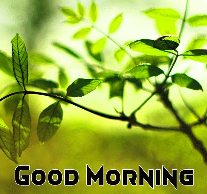 beautiful nature with good morning image