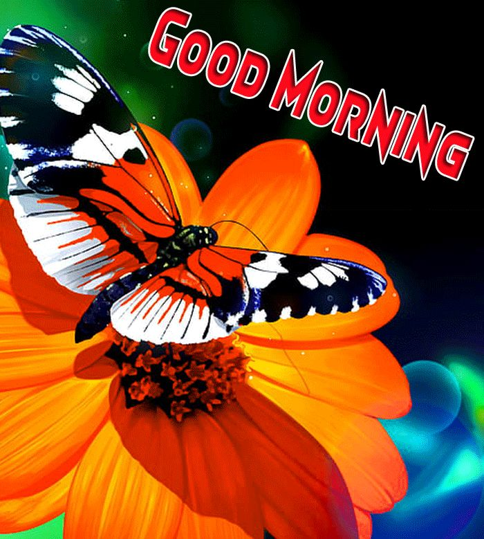 butterfly pics with good morning image