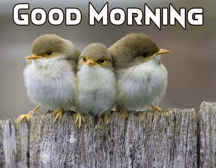cute animals images hd with good morning message