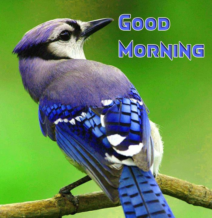 cute beautiful birds with good morning image