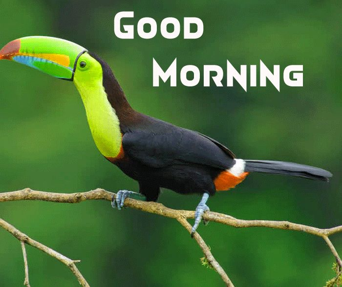 cute bird with good morning image