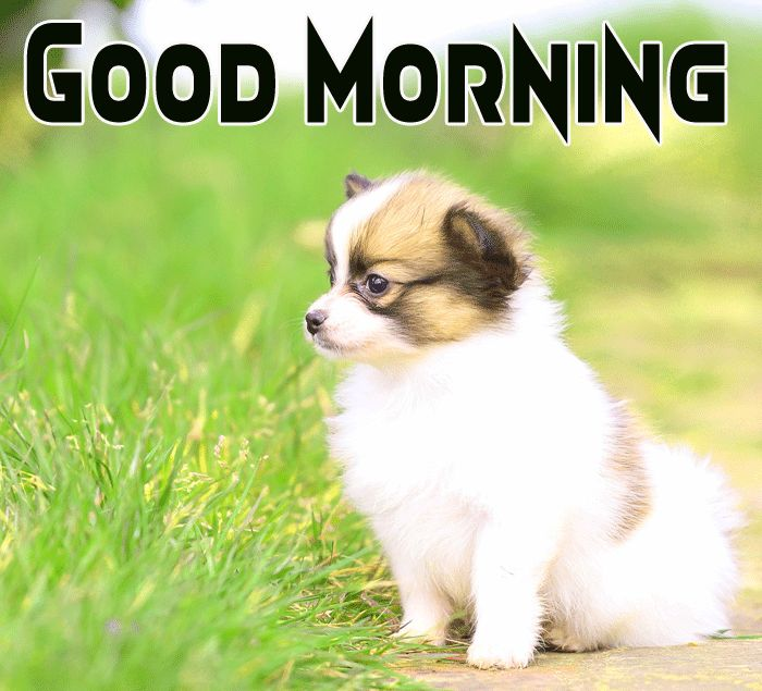 cute puppy good morning pictures