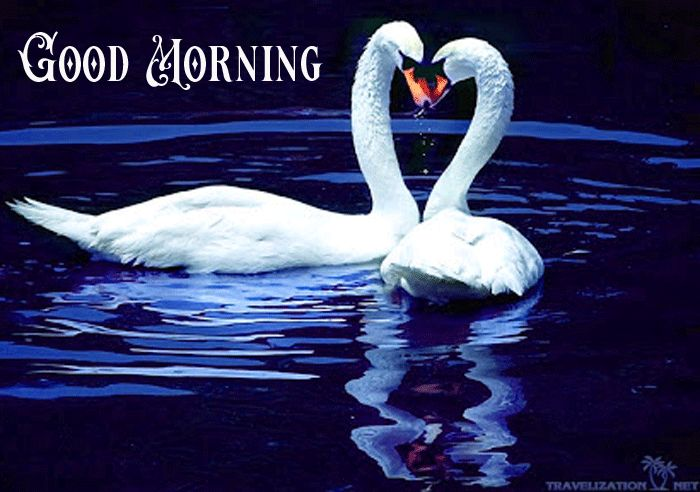 cute sawns with good morning image