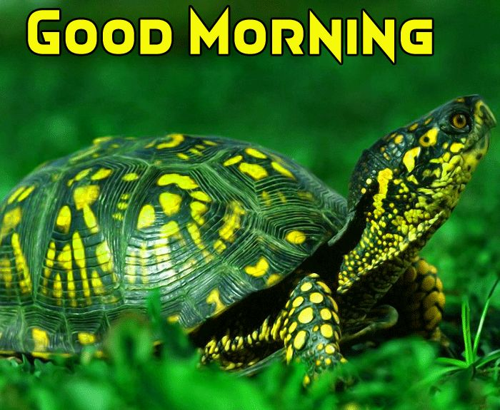 cute turtle with good morning image