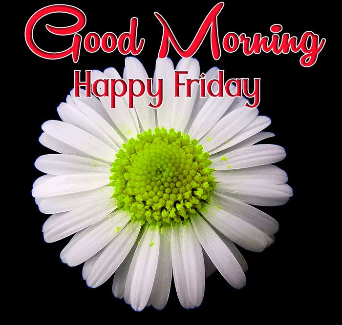 good morning happy friday images