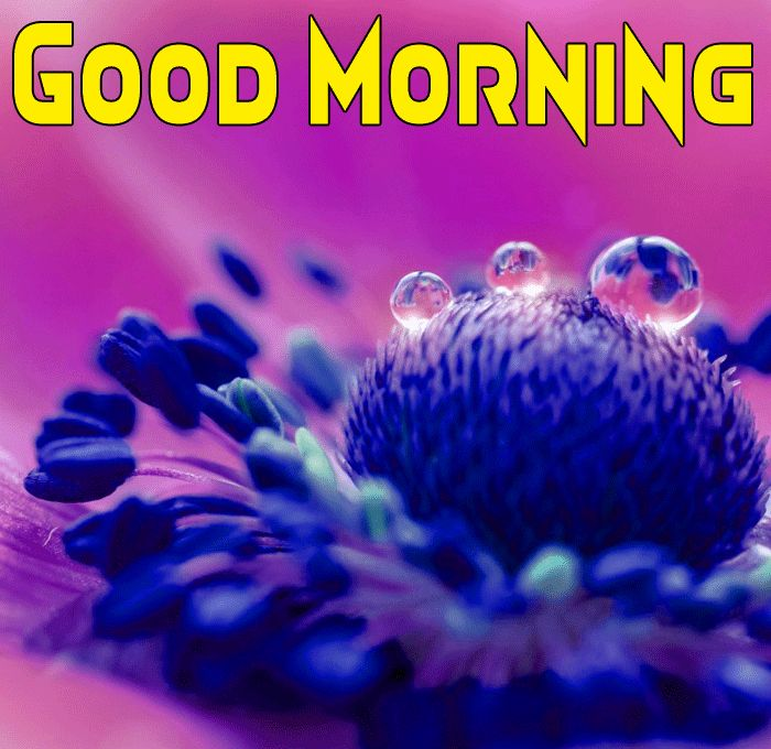 good morning images hd with flowers