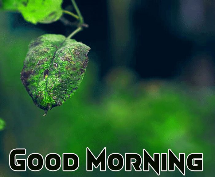 morning nature images