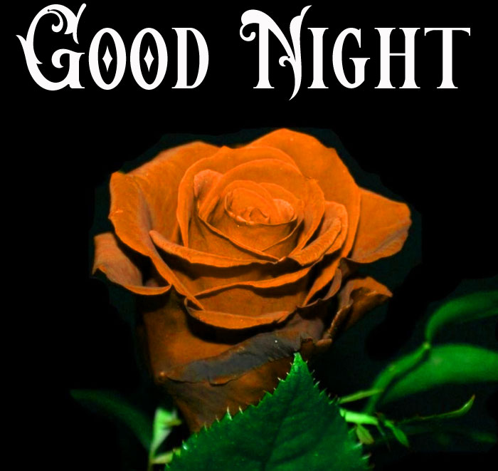 Good Night back and red rose images hd download