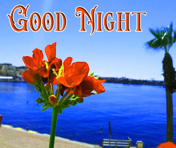 Good Night flower hd download