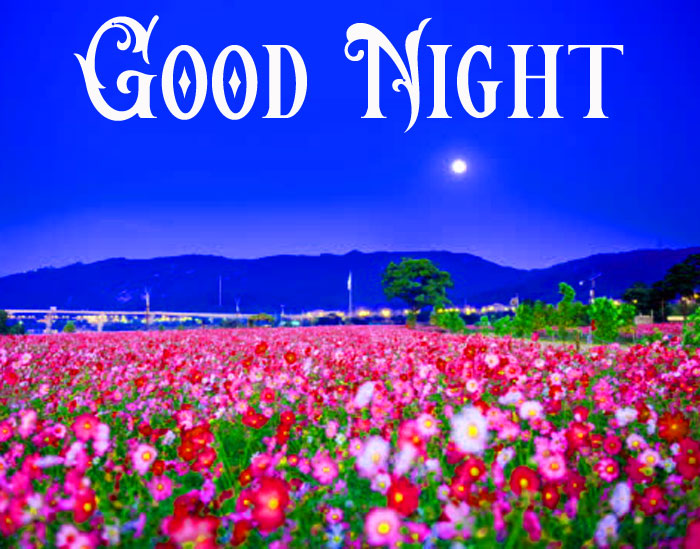 Good Night flower hd wallpaper download