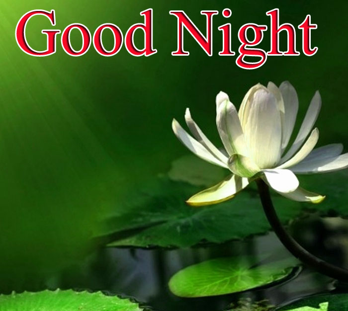 Good Night lotus wallpaper hd download