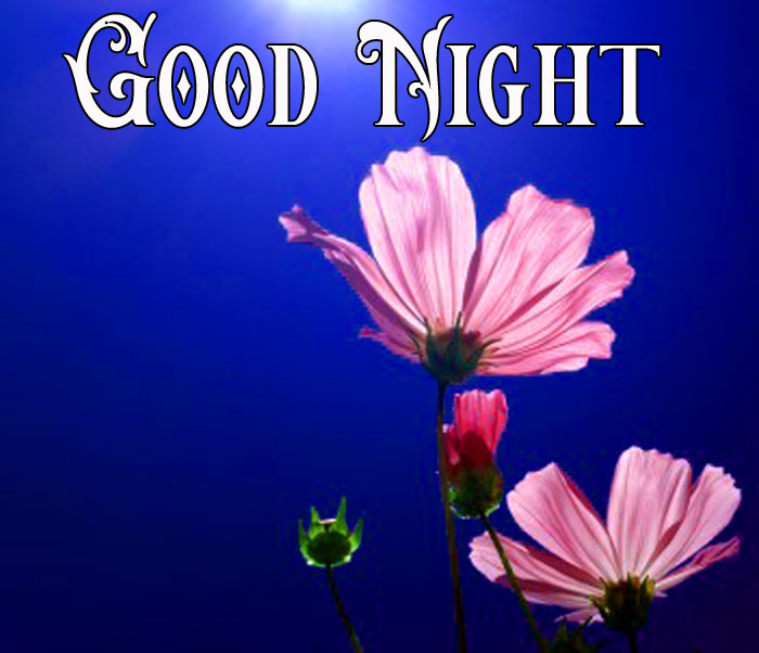 Good Night moon with flower images hd download