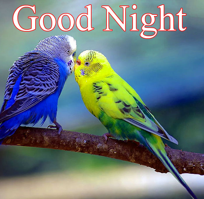 Good Night nature and bird image hd download