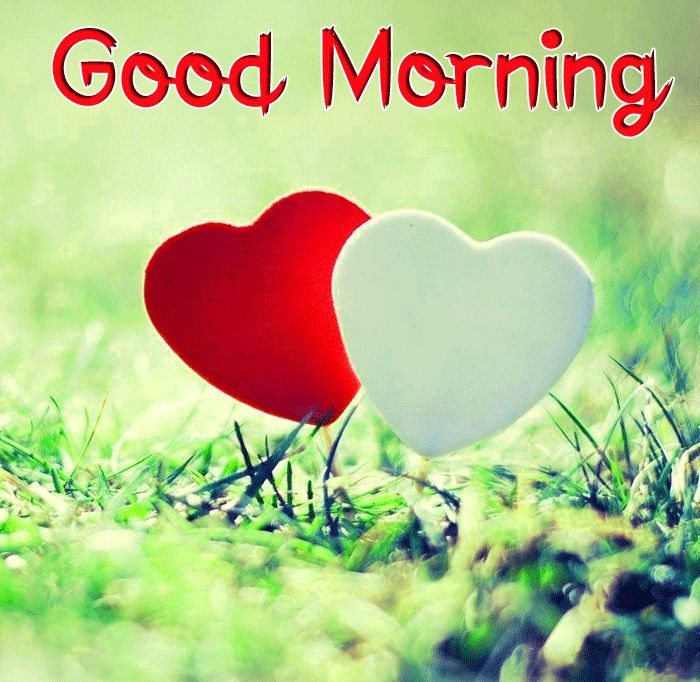 best red and white heart Good Morning images hd