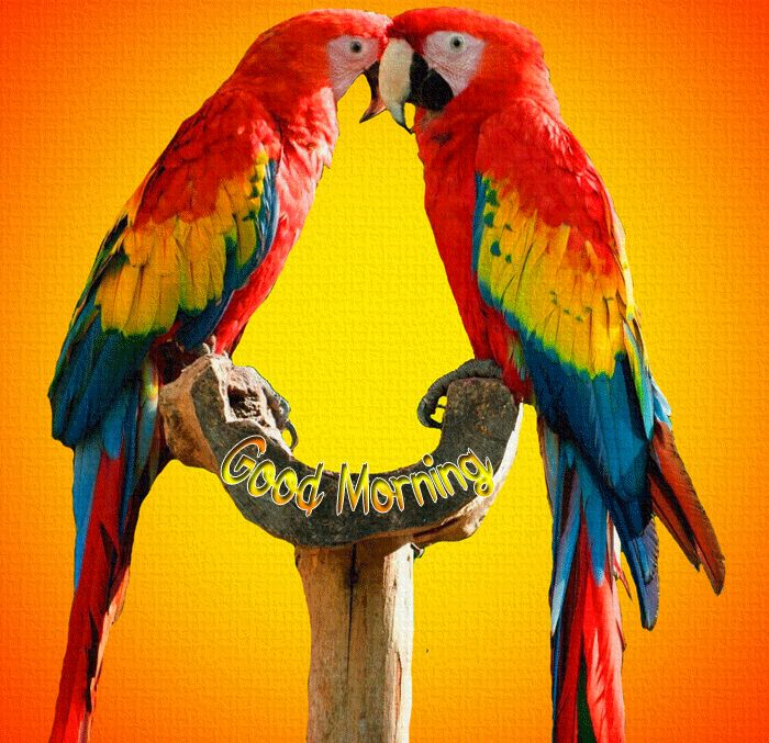 bird love Good Morning images hd