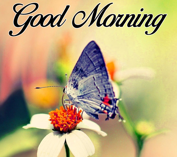 Good Morning butterfly images