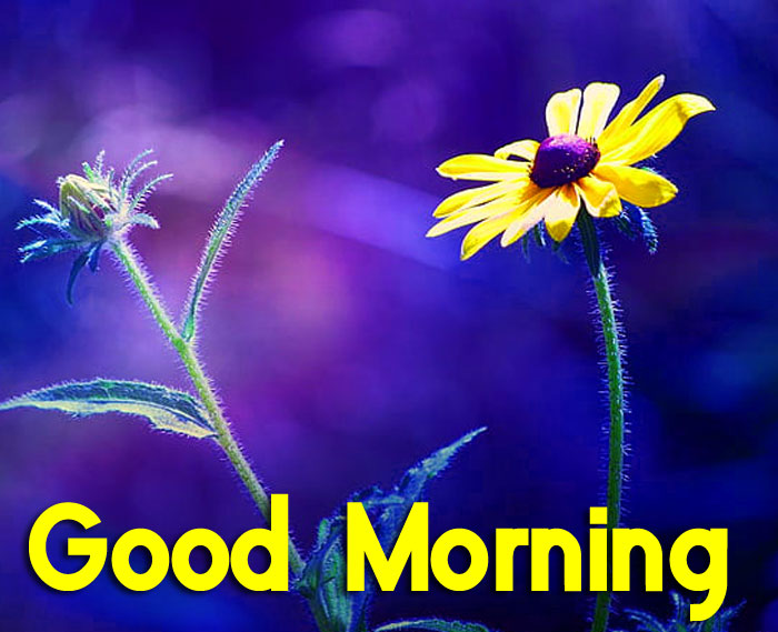 beautiful single Good Morning flower images