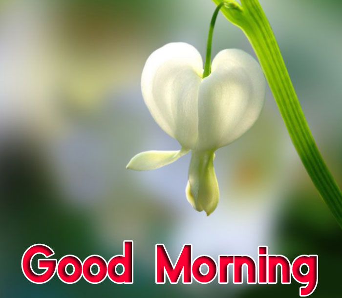 best ester lily flower Good Morning photo
