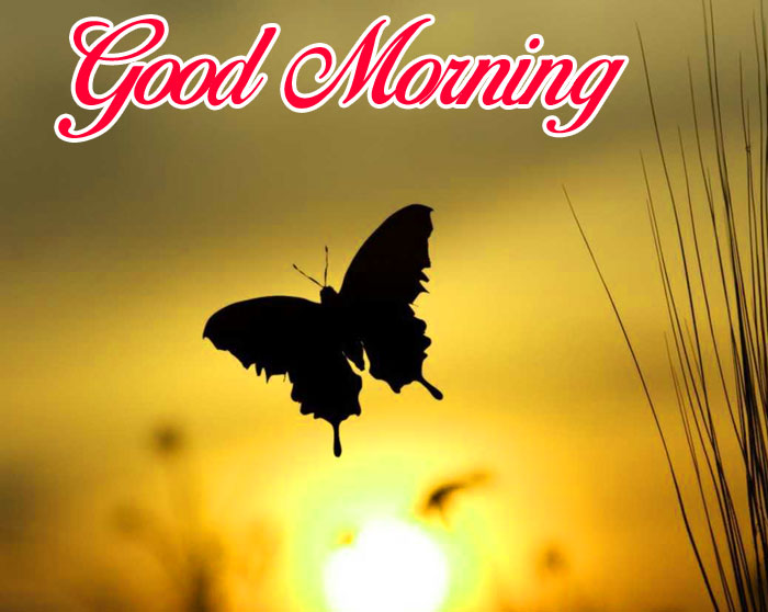 black butterfly Good Morning images