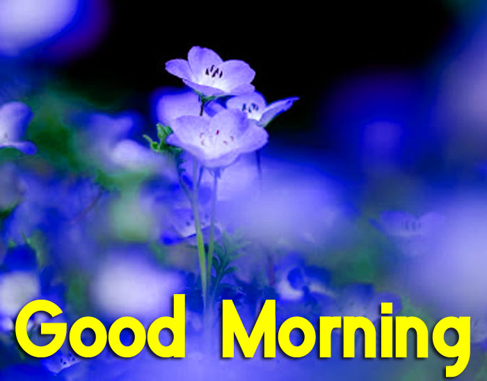 blue Good Morning flower hd