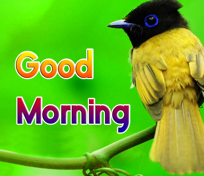 cute bird Good Morning hd wallpaper