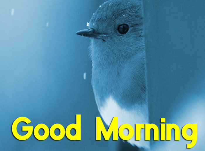 cute bird on rain Good Morning images