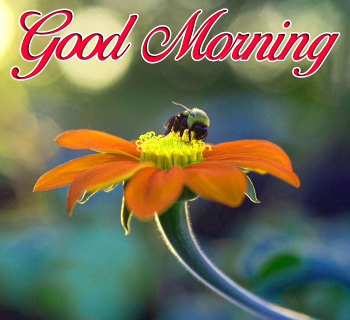 cute red flower Good Morning hd photro