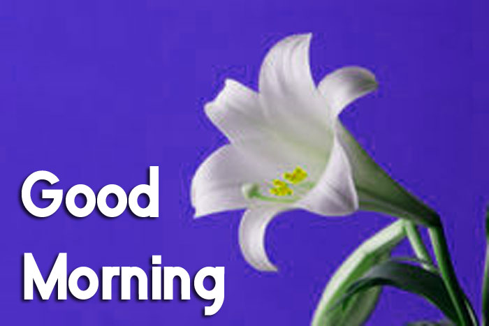 ester Good Morning flower hd
