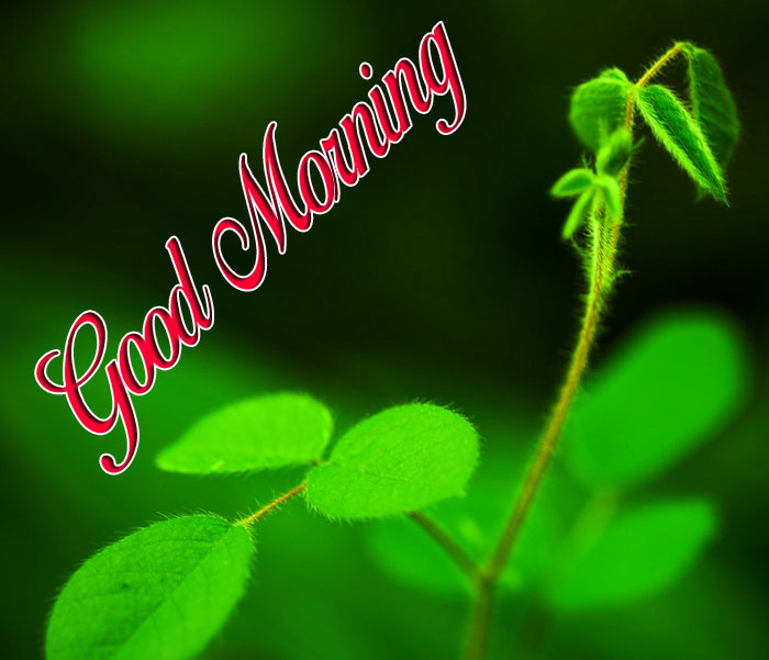 grren nature Good Morning hd wallpaper