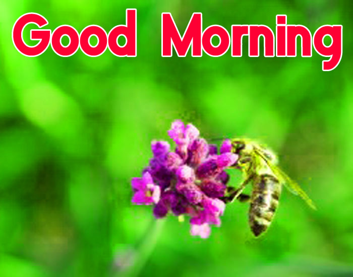 honey bee Good Morning images
