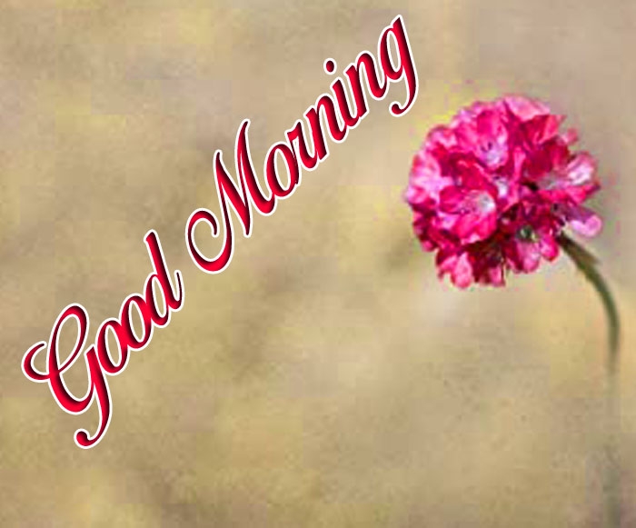 latest Good Morning alone flower images
