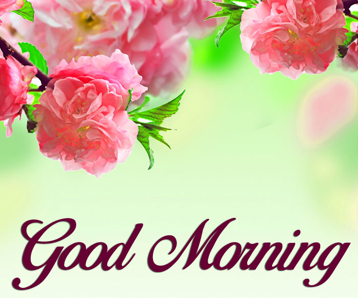 latest Good Morning flower hd picture