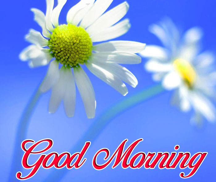 latest Good Morning white flower images hd