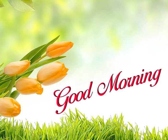 latest Good Morning yellow flower images