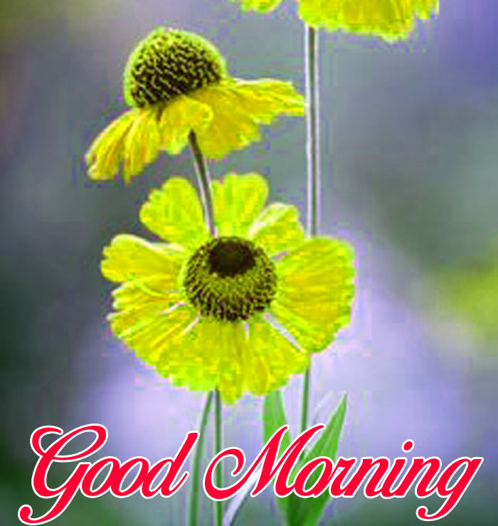 latest Good Morning yellow