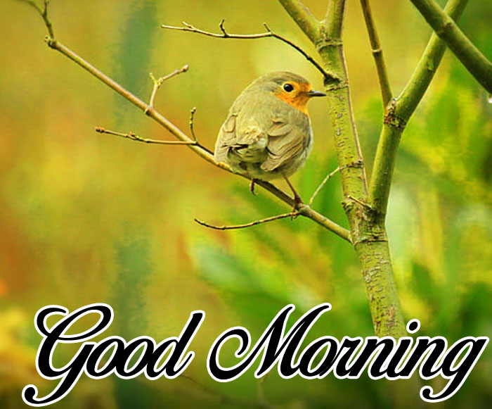 latest bird Good Morning pics hd