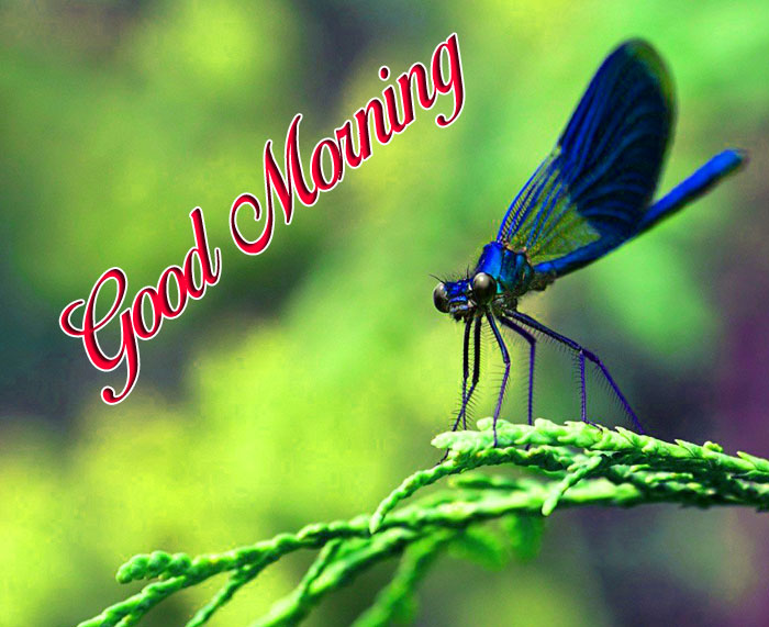 latest butterfly Good Morning images