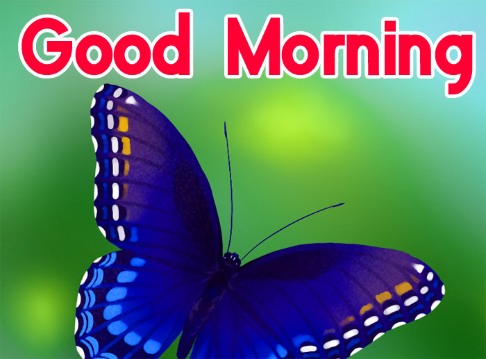 latest butterfly Good Morning pics hd