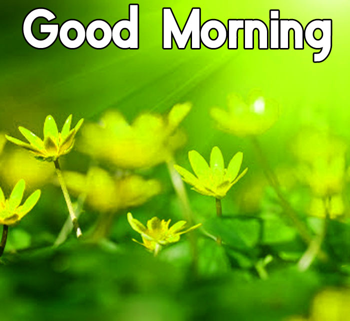latest green Good Morning flower hd