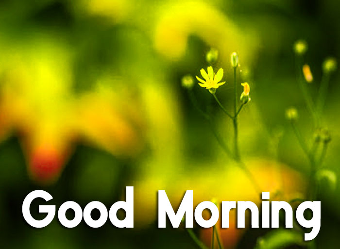 latest green Good Morning hd