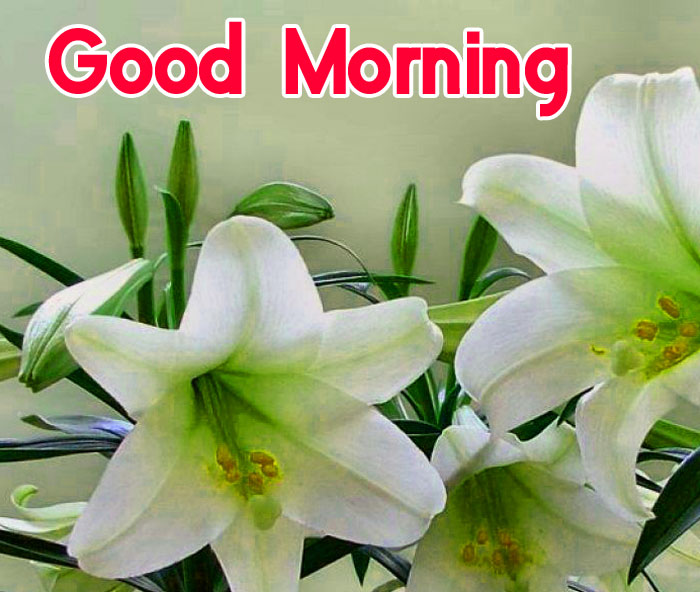 latest macro white flower Good Morning pics hd