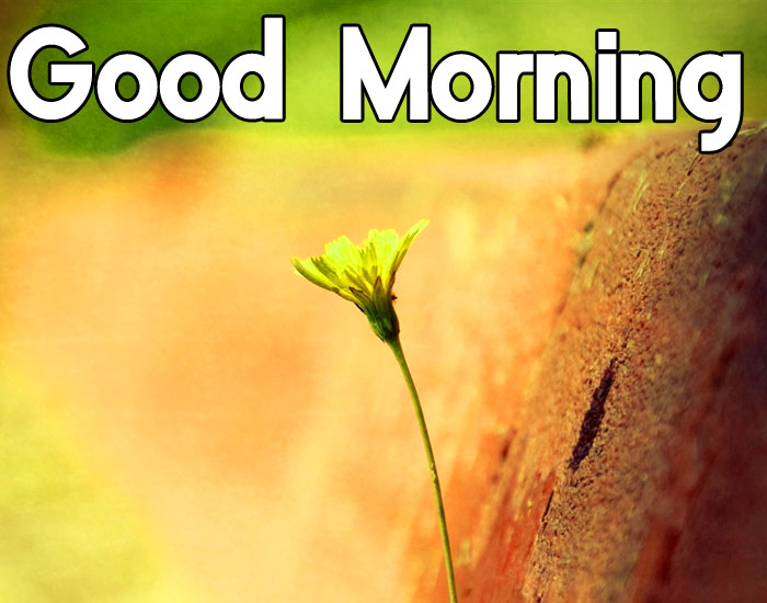 latest single Good Morning flower hd