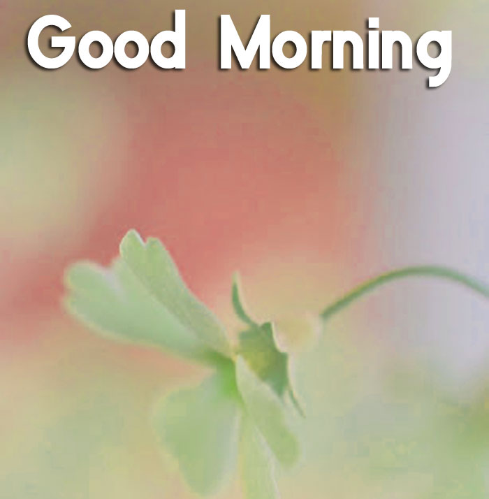 latest single Good Morning hd wallpaper